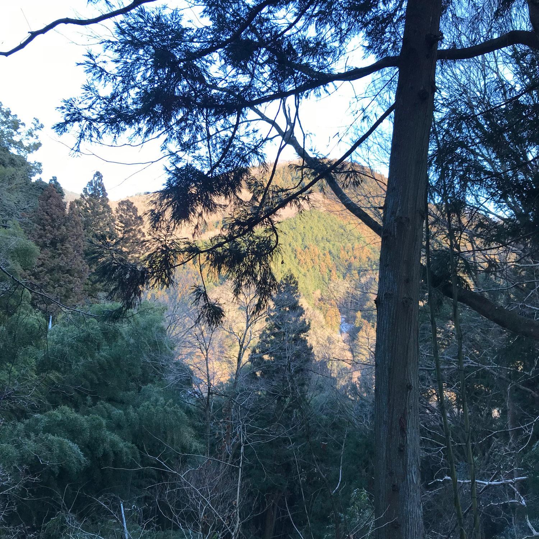 Fujino - trees and mountains