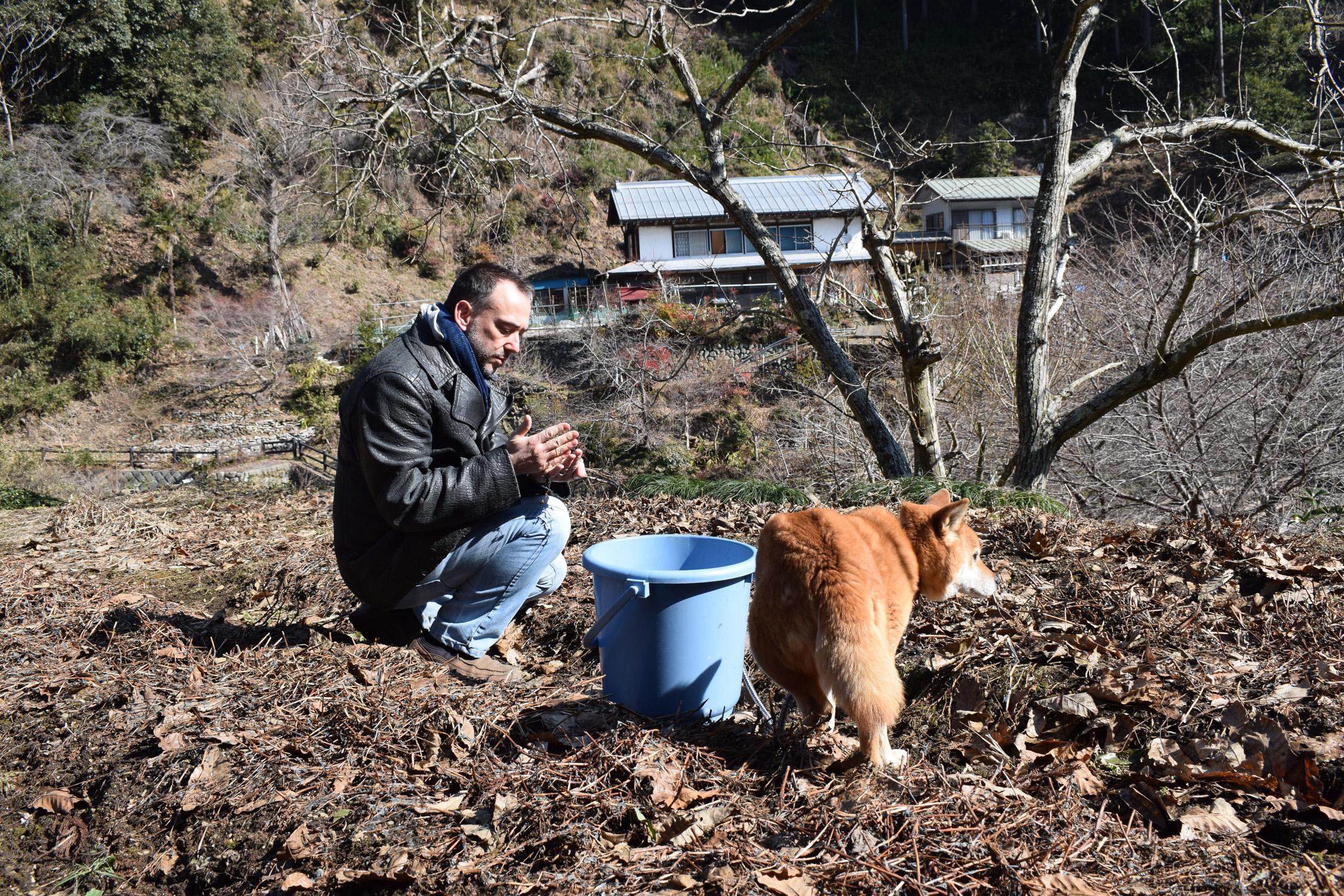 Harvesting indigo seeds with Momo 2