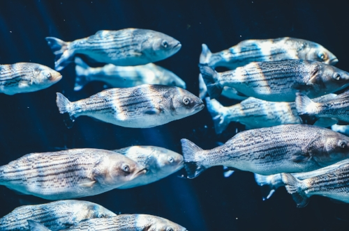 A school of fishes. Photo by  Pexels .