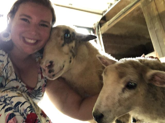 Sorry for the horrible quality photo but I couldn't not share that sheep smile from Zeke 🥰🥰🥰 . . . . #love #friendsnotfood #vegan #govegan #catskillanimalsanctuary #lovespokenhere #fatvegan #sheep #sheepofinstagram #stopeatinganimals #vegans #veganfortheanimals