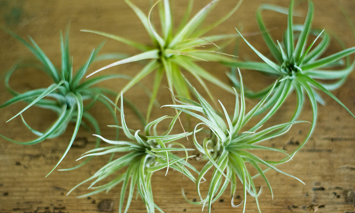 Say hello to my little friends:The Plantalones. -