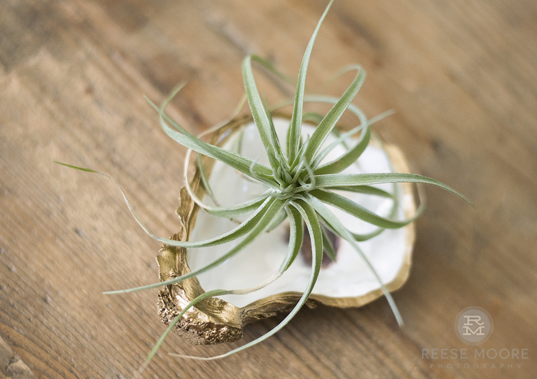 Grit and Grace oyster shell planter by Rachel Gordon