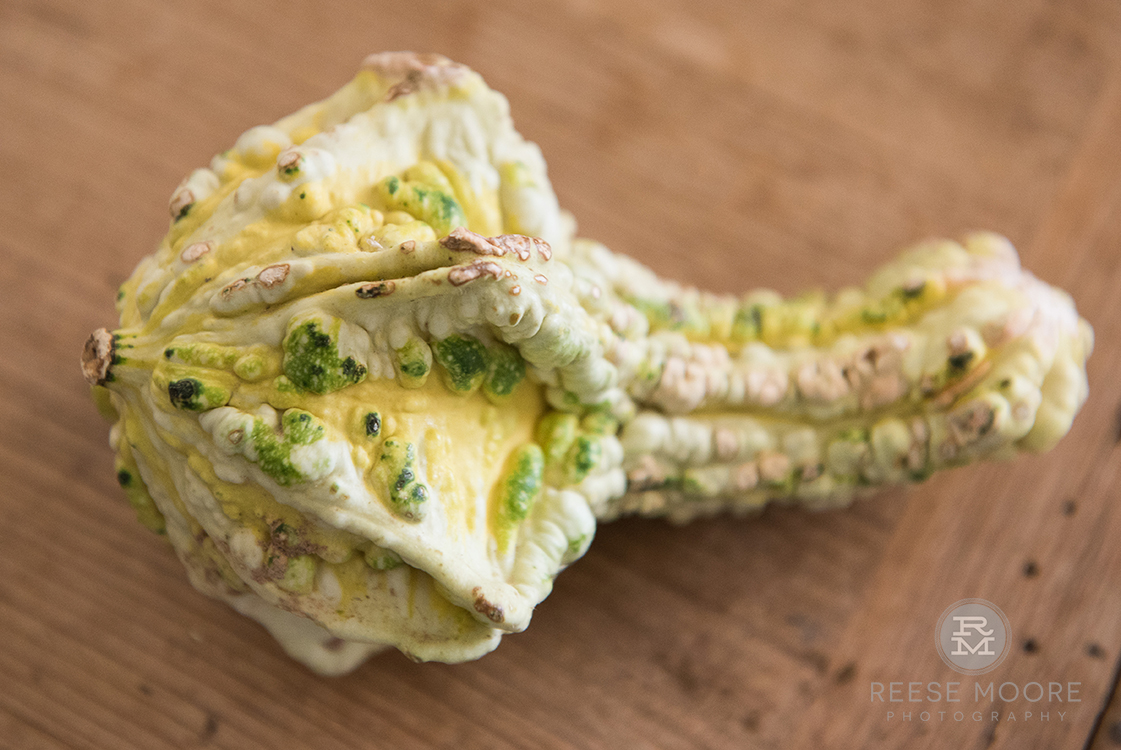 Some of my gourds were a little worse for wear... -