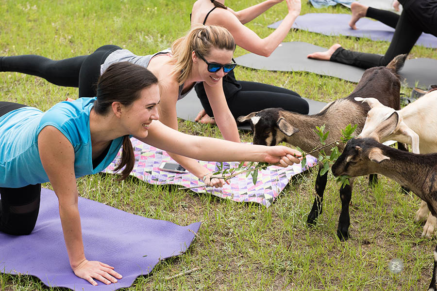 5 Ways Goat Yoga Is About To Change Your Life