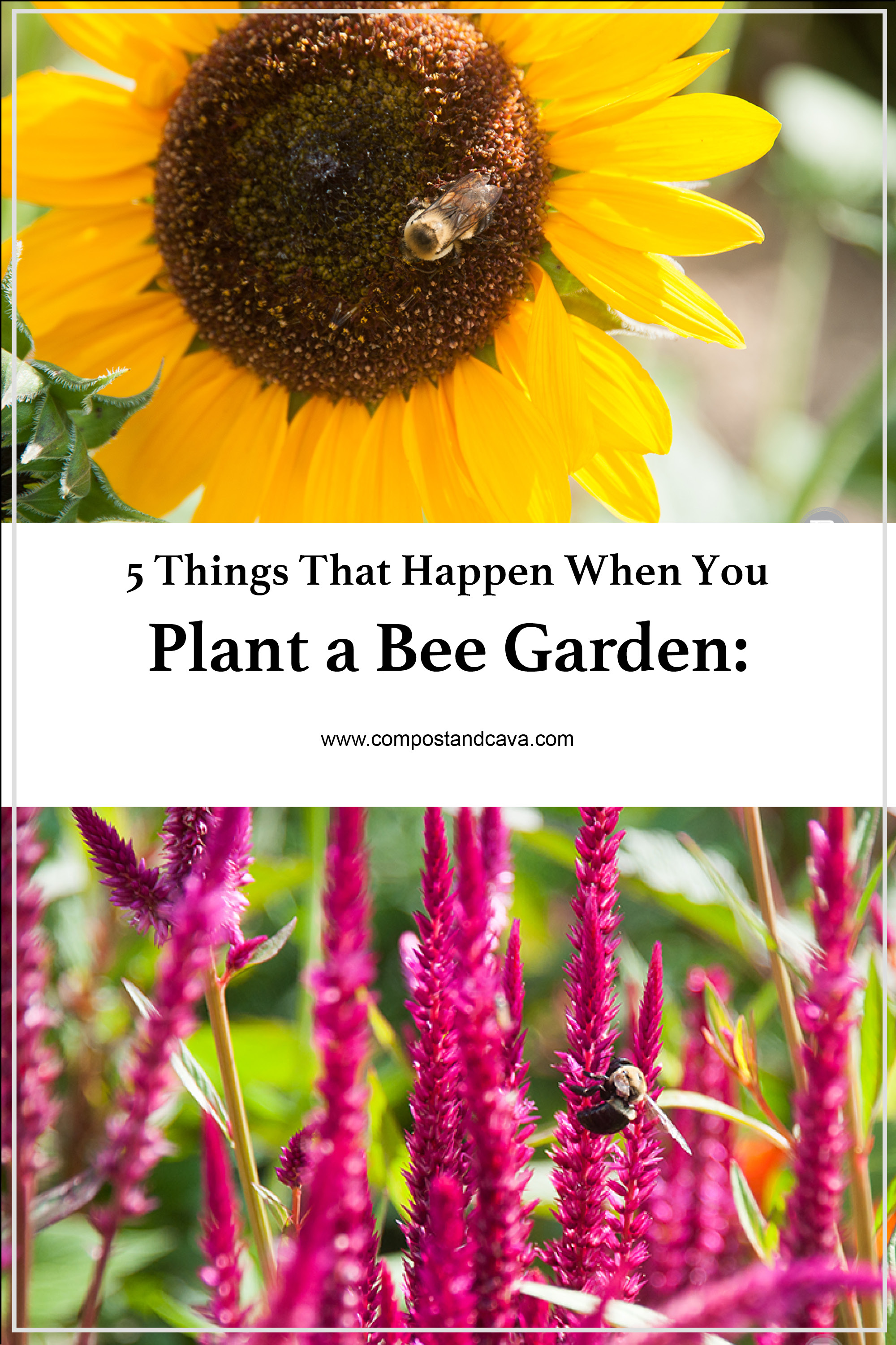 5 Things That Happen When You Have A Bee Garden