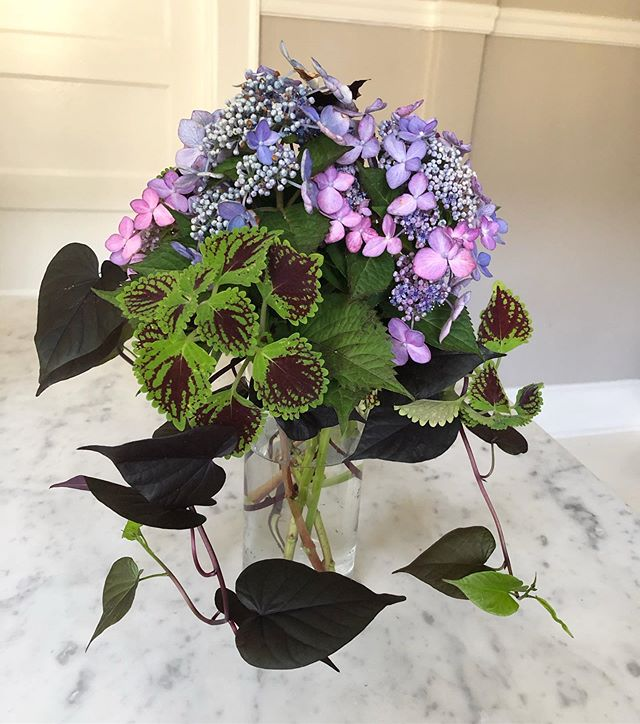 Anything is fair game when it comes to bouquets! #ipomea #coleus #hydrangea