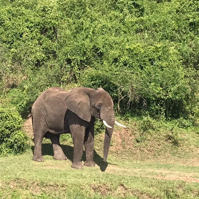 Safari, Uganda, Adventure