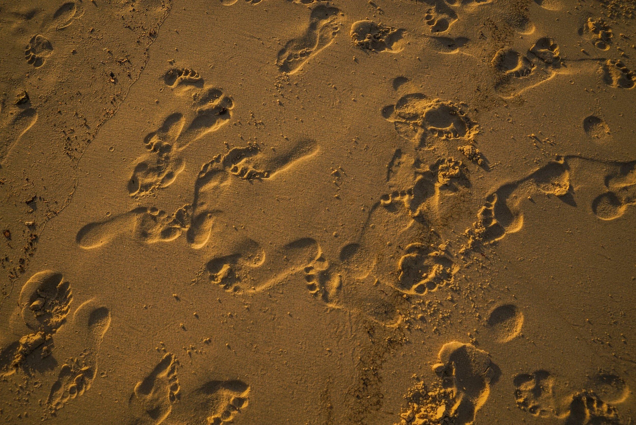 beach-footprints-footsteps-1656671.jpg