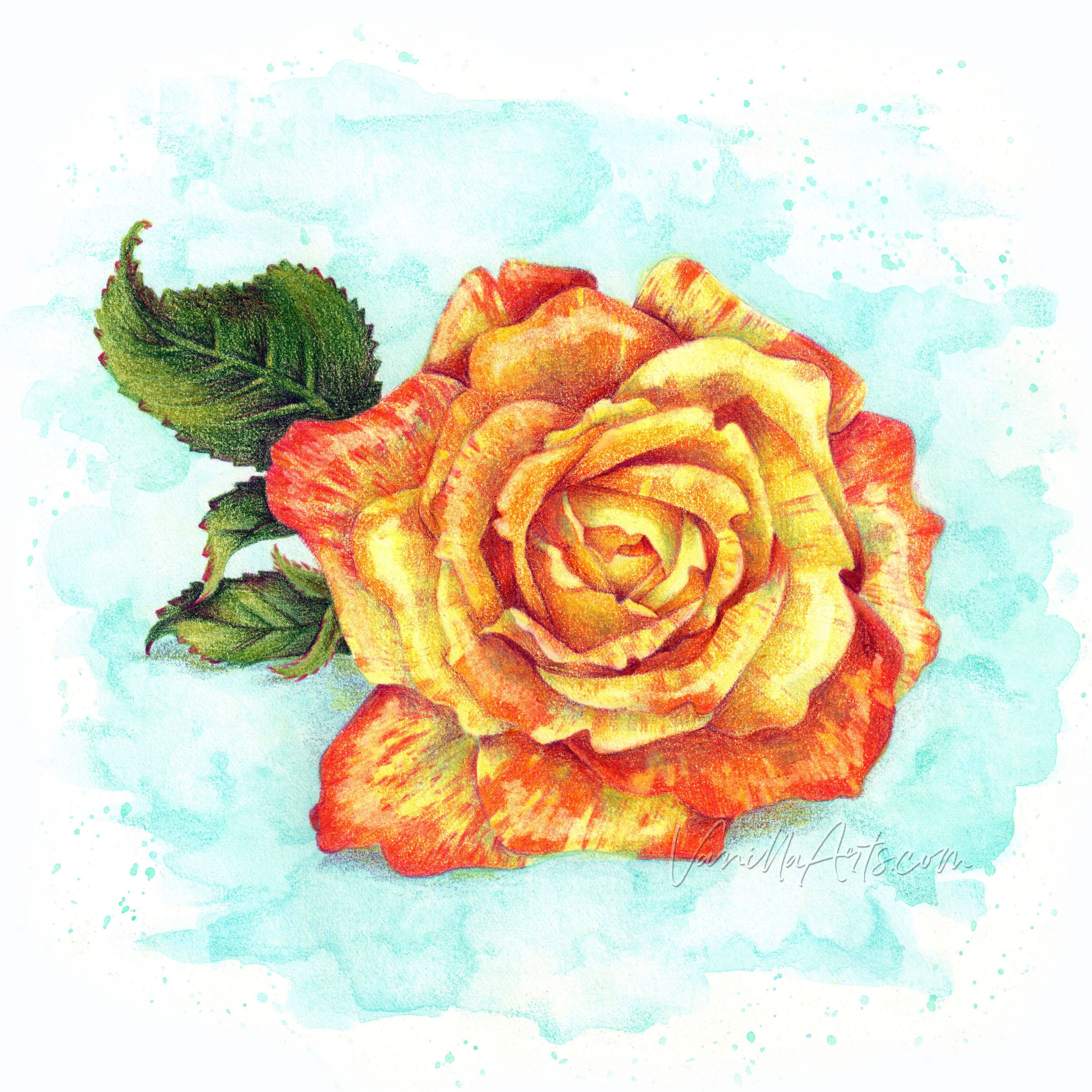 Learn to use colored pencils the way an artist uses paint. You can get amazing depth and dimension from your colored pencils but you'll have to ditch the crafty coloring tuts and recipes! | ColoredPencilPlus.com