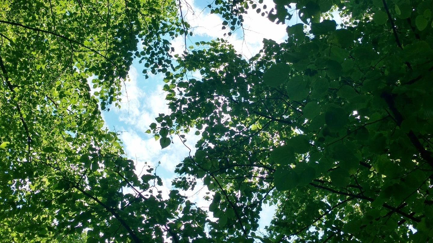 Image of tree leaves and sky above