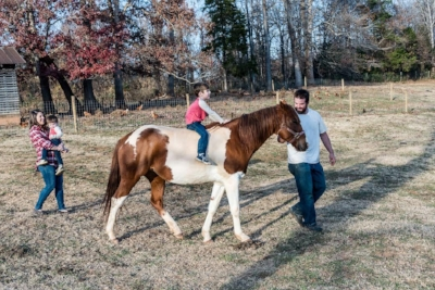 Old Holler Farm is a cattle farm in Rural Hall, NC offering grass fed cattle and free range eggs