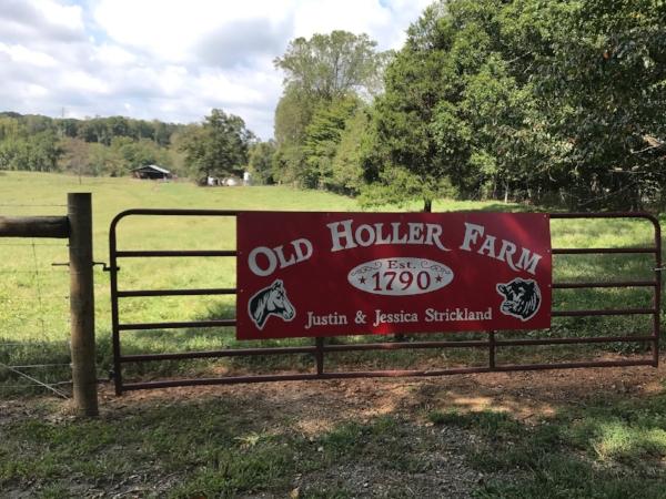 Old Holler Farm is a working cattle farm and farm wedding venue near Winston Salem, NC