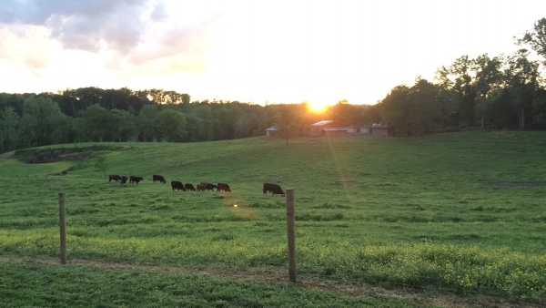 meat market at old holler farm selling grass fed beef in nc