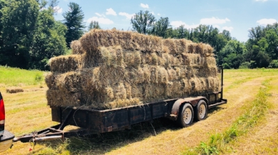 hay bales for grass fed beef at old holler farm in rural hall, nc