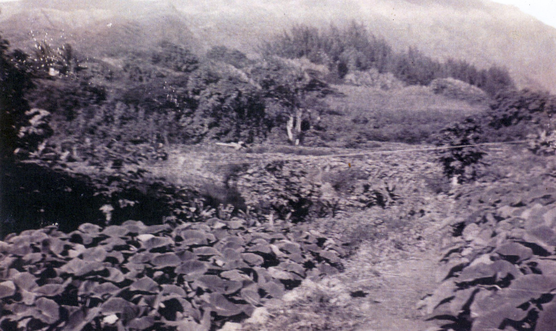 (1) Moʻokūʻauhau.jpg