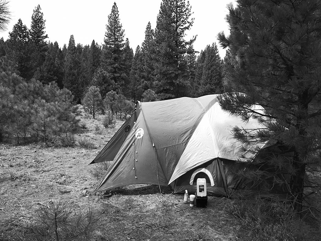 Sierra Mountains on the California/Nevada border, North of Lake Tahoe.