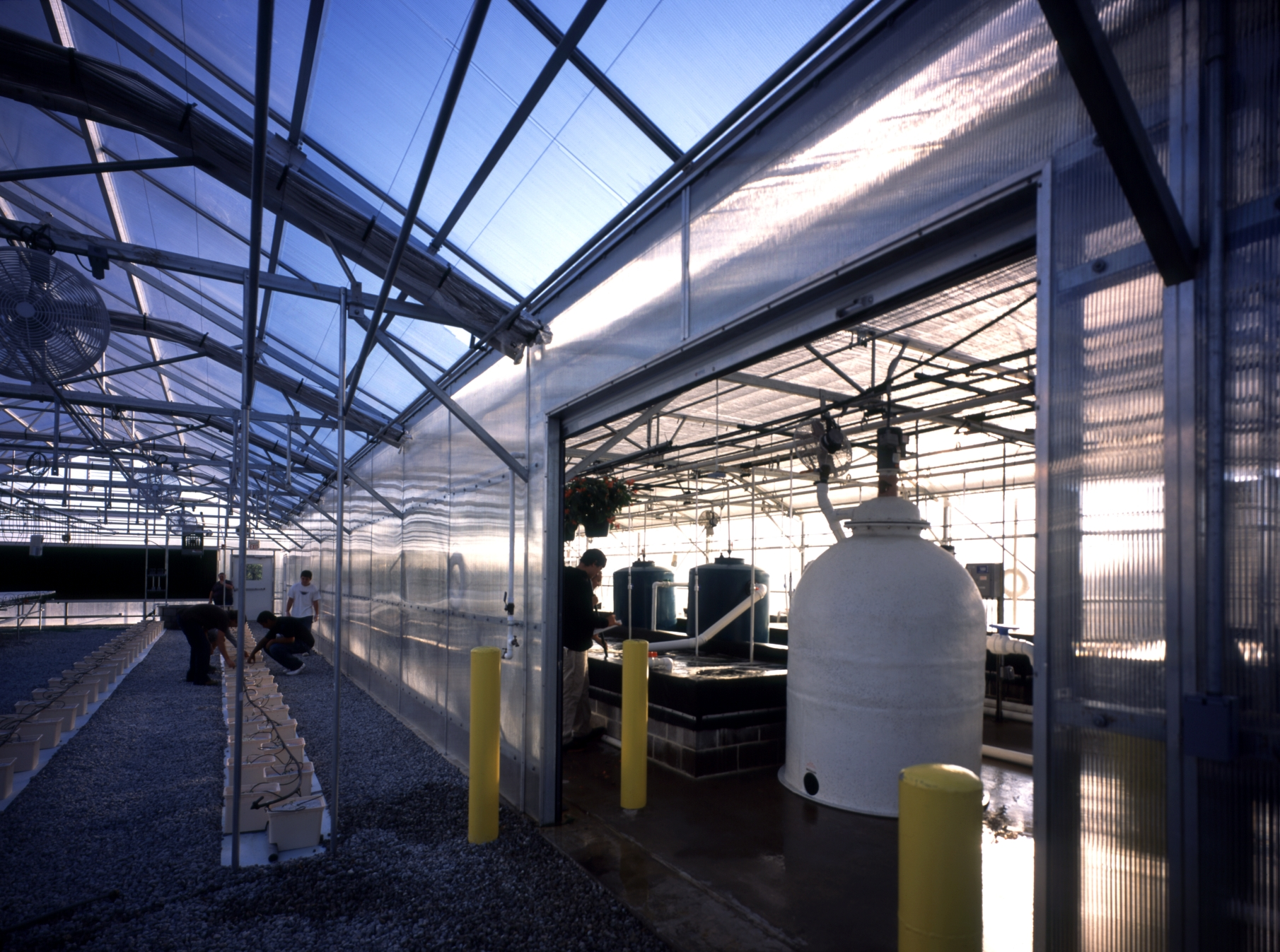Liberty - greenhouse.JPG