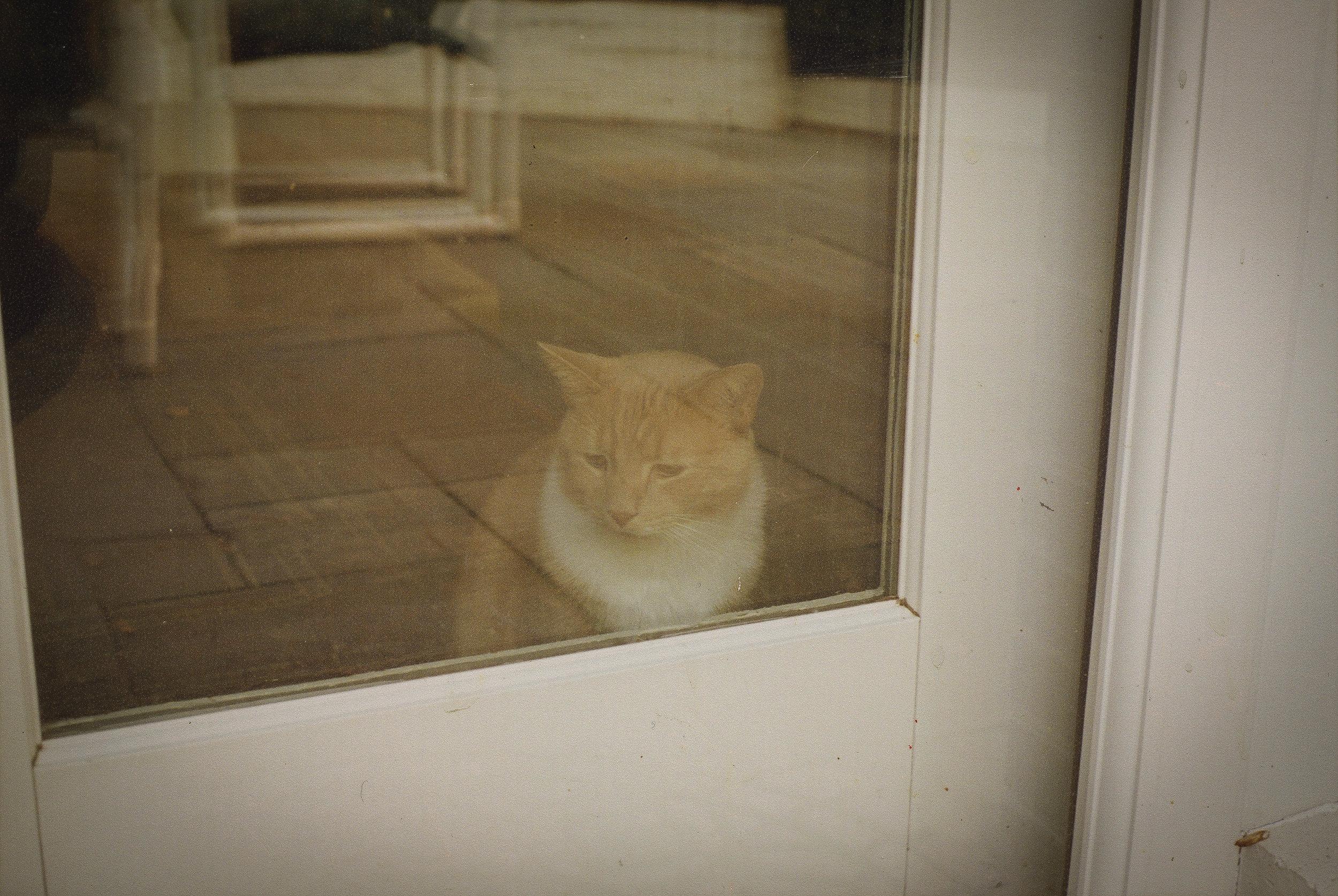 Tobyn Window.jpg