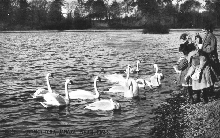 Photograph of children feeding the swans at Jamaica Pond taken from a period postcard (circa 1900). A high resolution version of this photograph can be