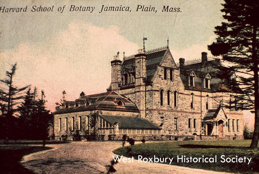 Postcard of Harvard School of Botany, courtesy of West Roxbury Historical Society.