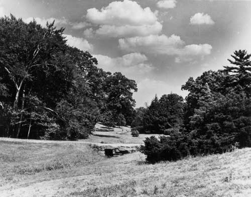 A view of Bussey Brook in the Arnold Arboretum, taken in 1949 by Professor Karl Sax, who was the Arboretum's Director at the time. Photograph from the Archives of the Arnold Arboretum. Used with permission from the website of the Institute for Cultural Landscape Studies of the Arnold Arboretum.  ©T he President and Fellows of Harvard College.