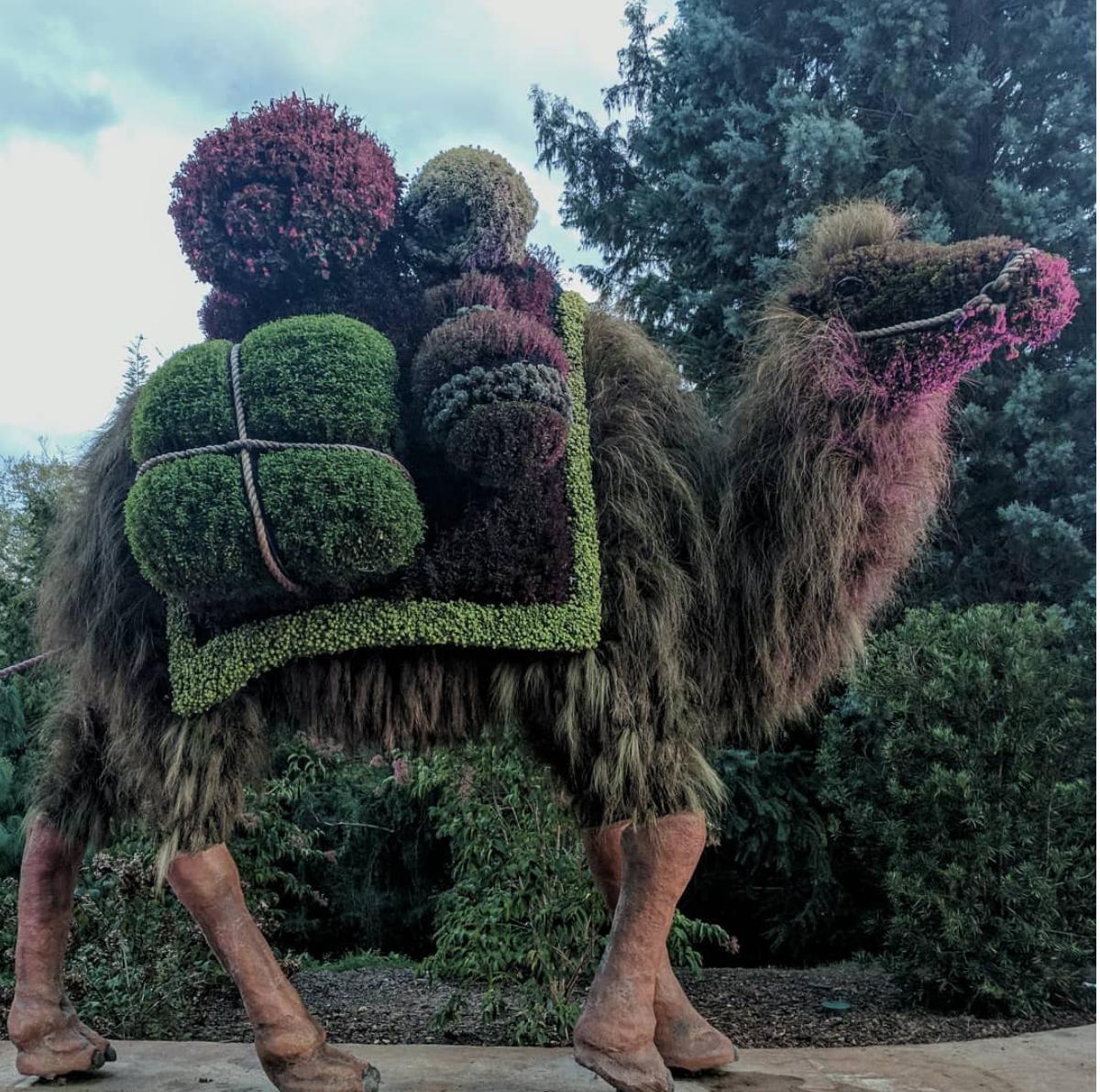 Organic Camel Sculpture, Atlanta Botanical Gardens