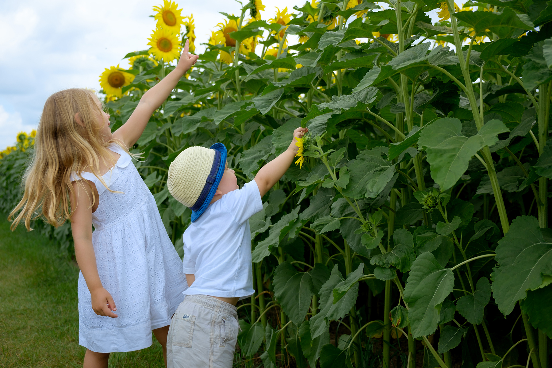 family-photography-kitchener-waterloo-sunflower-farm-3