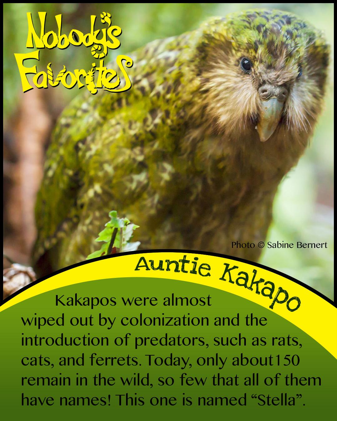 Auntie Kakapo Conservation