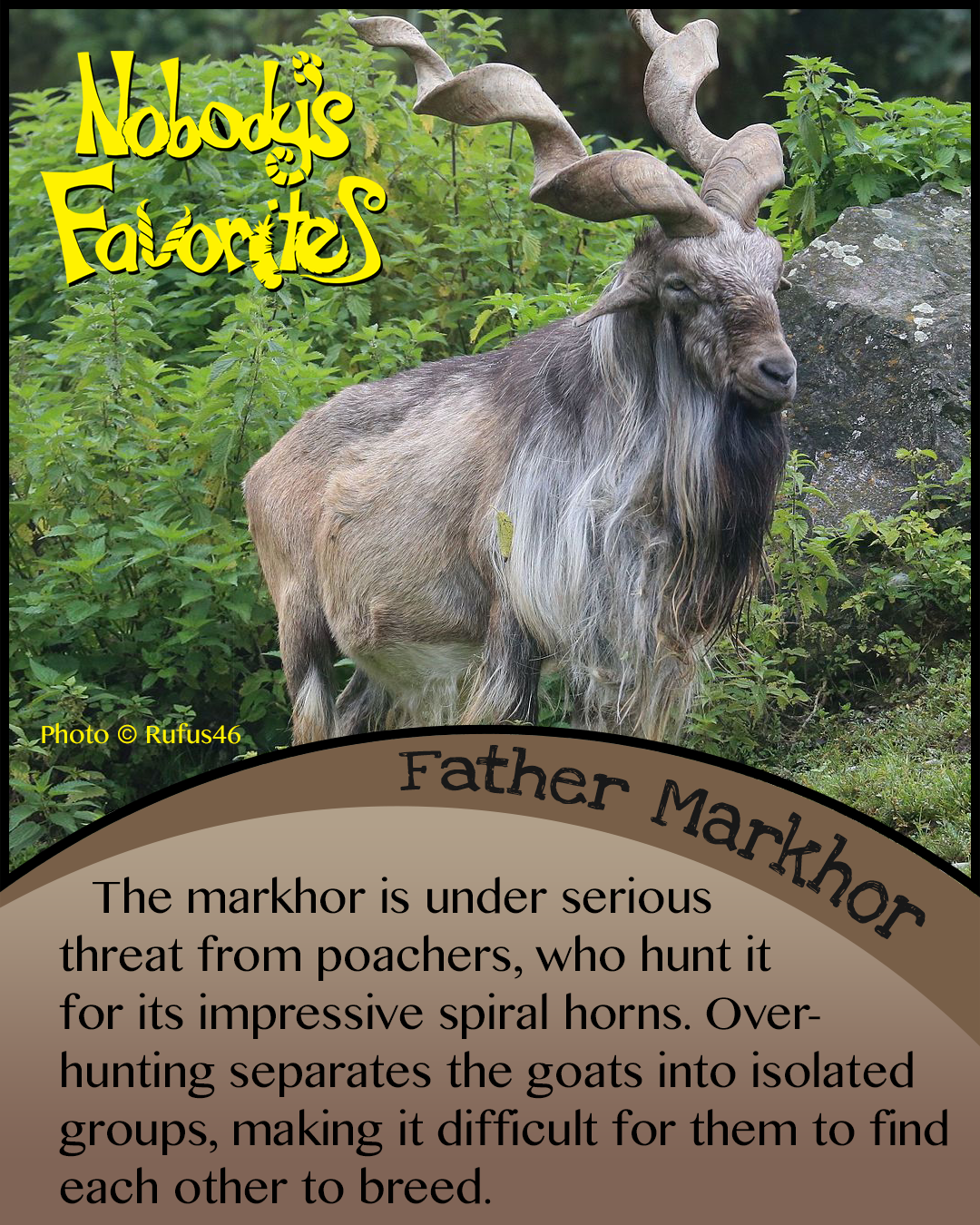 Father Markhor - Conservation