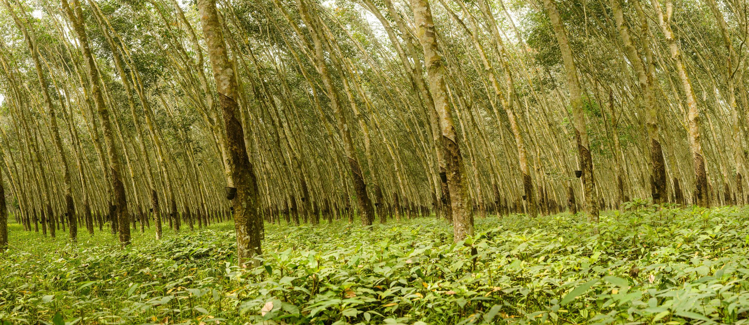 Copy of Côte D'Ivoire