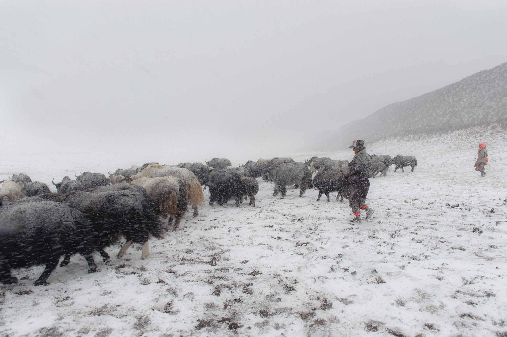 Just another day in Tibet - Life in the roof of the world, where the few remaining Tibetan nomads try to continue with ther way of life the way it has always been.