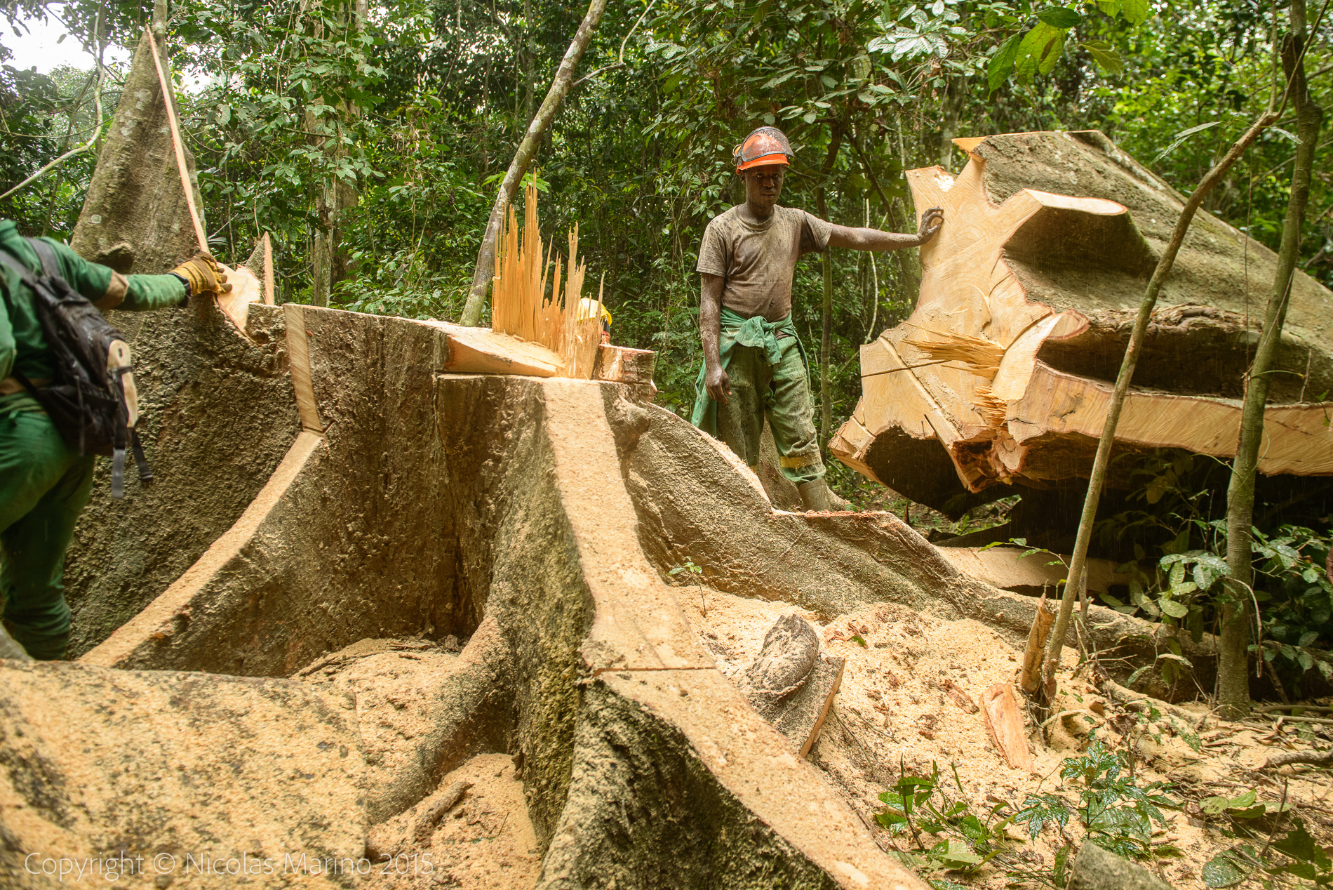 sustainable logging in the equatorial rainforest. Cameroon