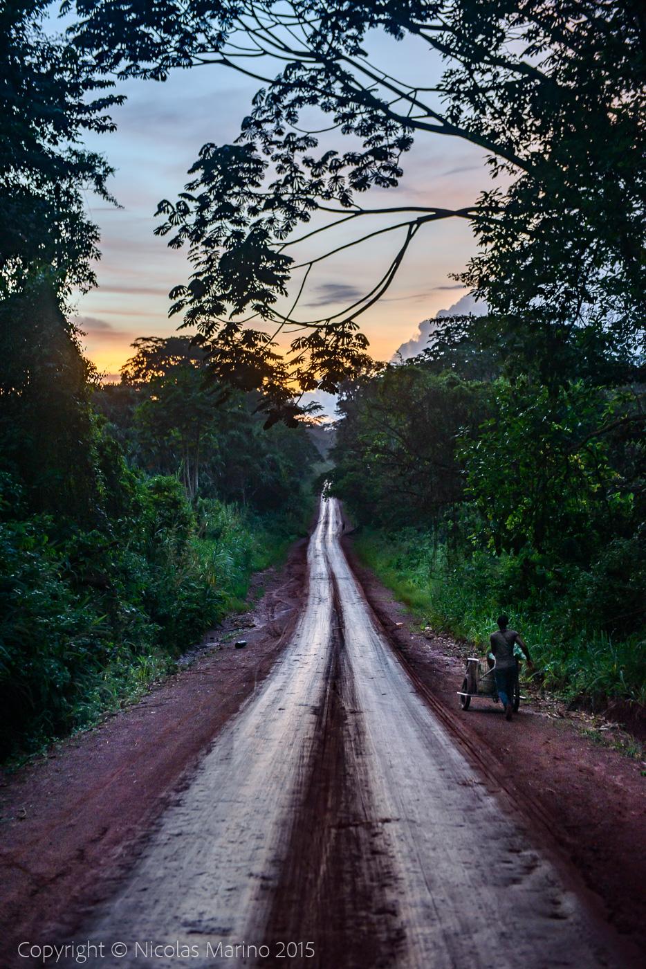 Equatorial rainforest. Cameroon