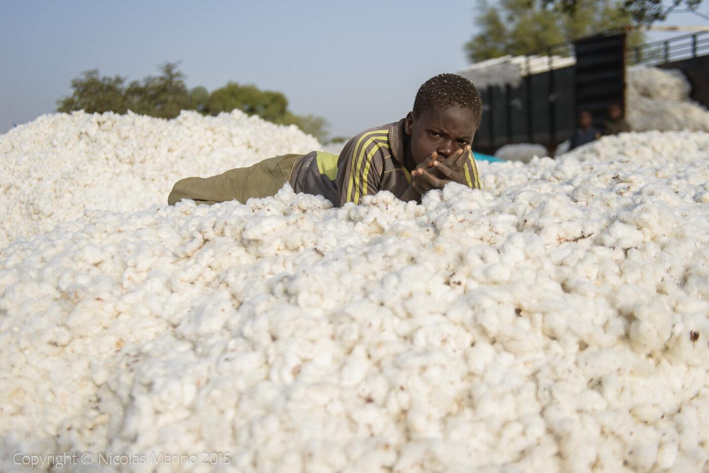 cotton recollection. Burkina Faso