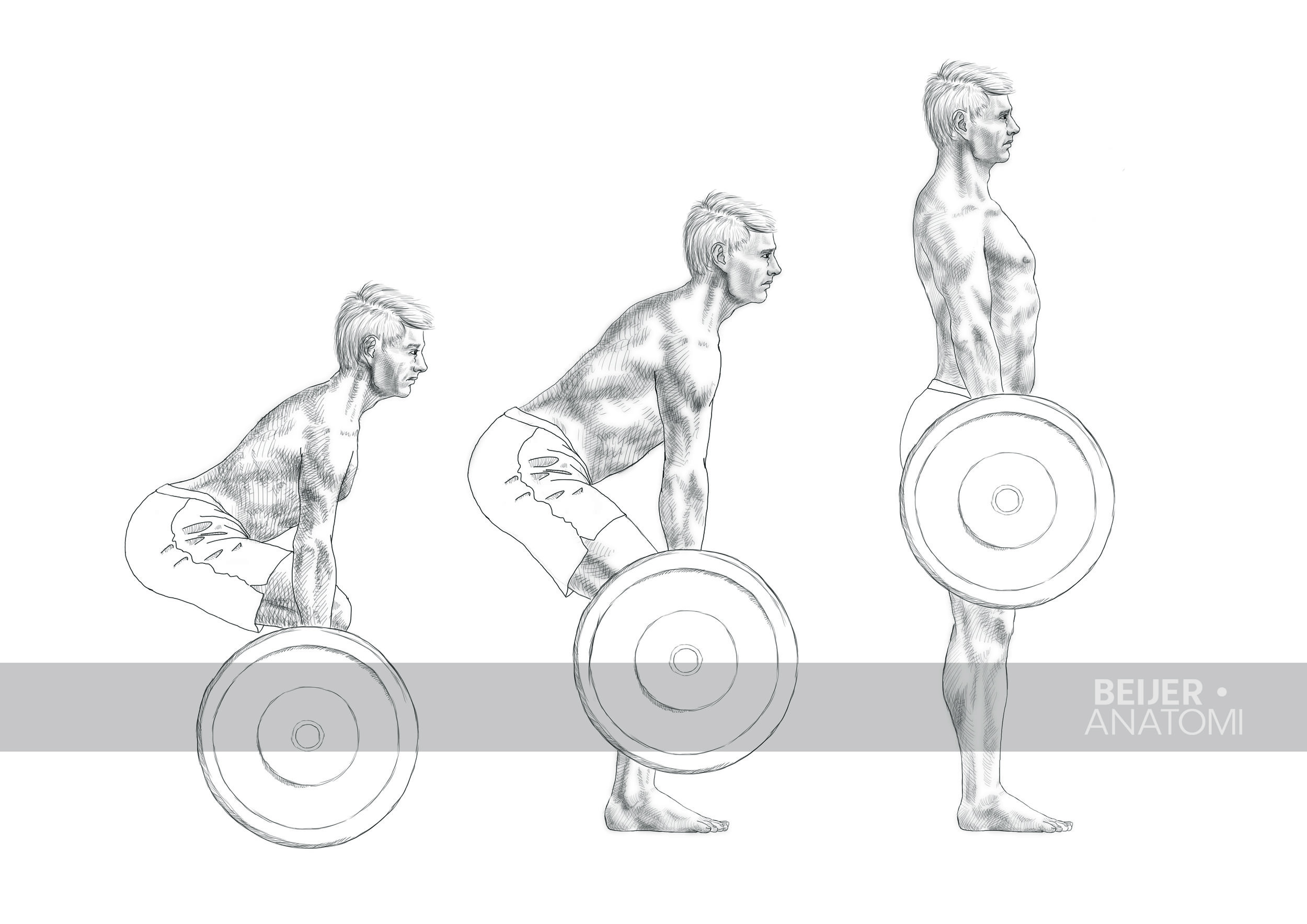 Marklyft. Illustration för Gymgrossisten.