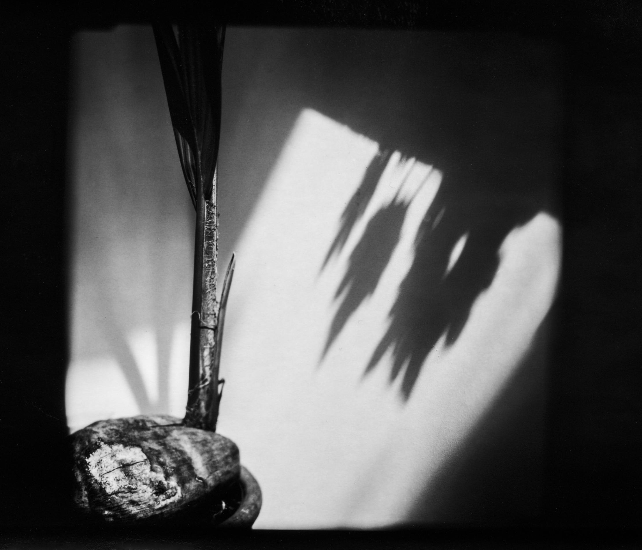 conservatorycoconut.jpg