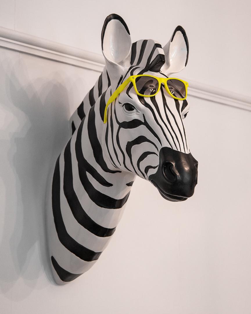 Frank, The Zebra.