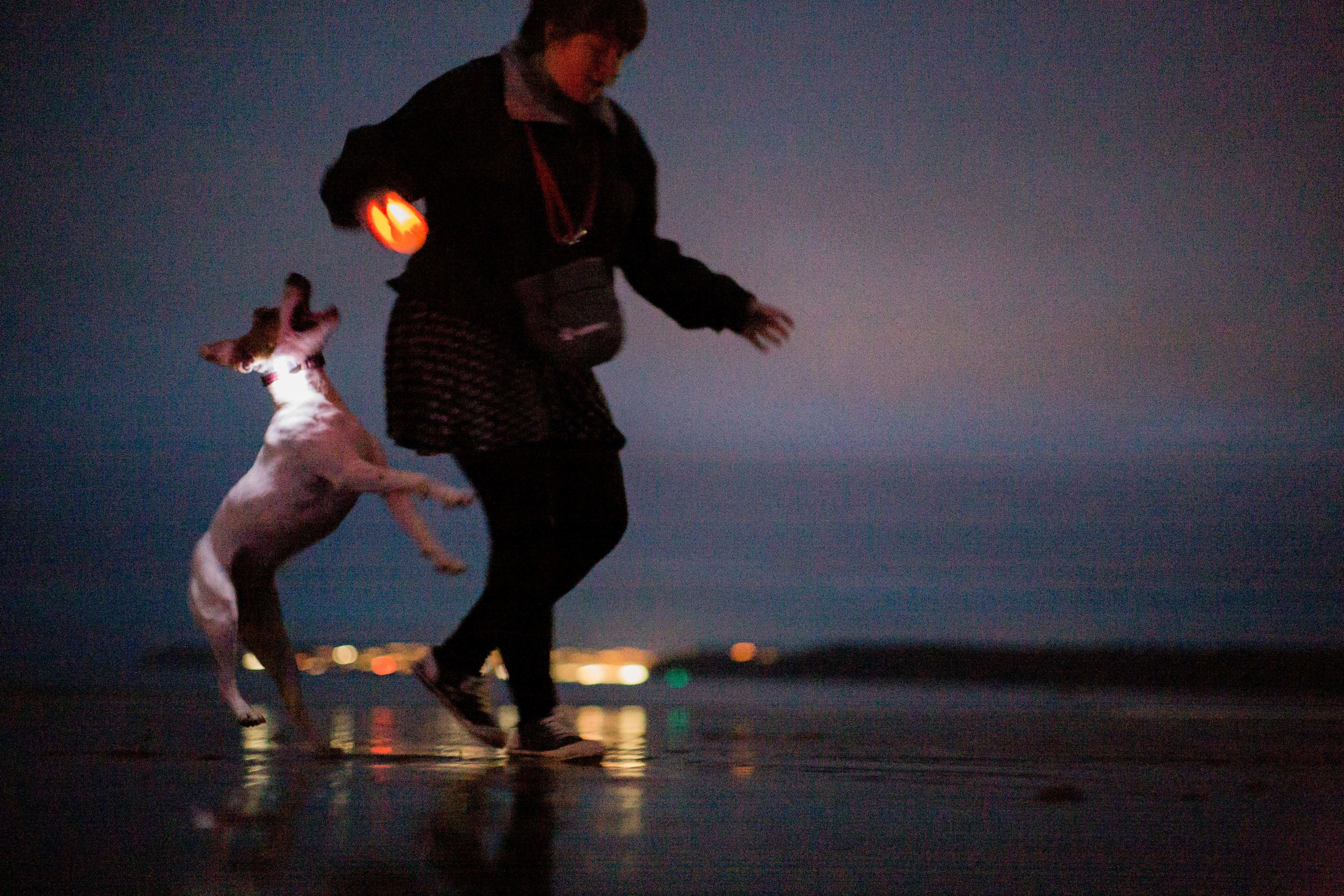- 🌟Watch the Dog Ballet on Torre Abbey Sands with light up balls, collars and music on Saturday from 8-9pm.
