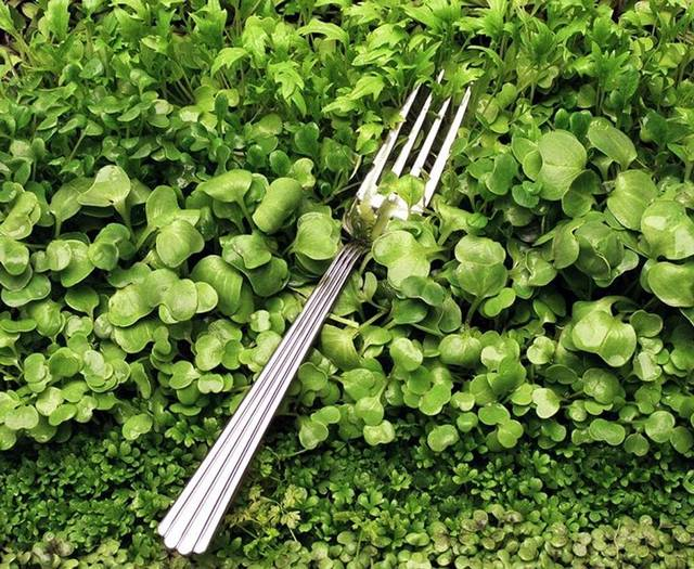 """What people are saying... - - """"Wow, I didn't know I would get so excited to see how a salad grows. Walking through the rows of lettuce was amazing!"""""""