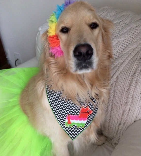 Cinco de Mayo - We are ready for Cinco de Mayo at The Birthday Puppy! We already fully embrace Taco Tuesday, and are excited for an entire day to celebrate some of our favorite things. So let's get dressed up and get ready to party!