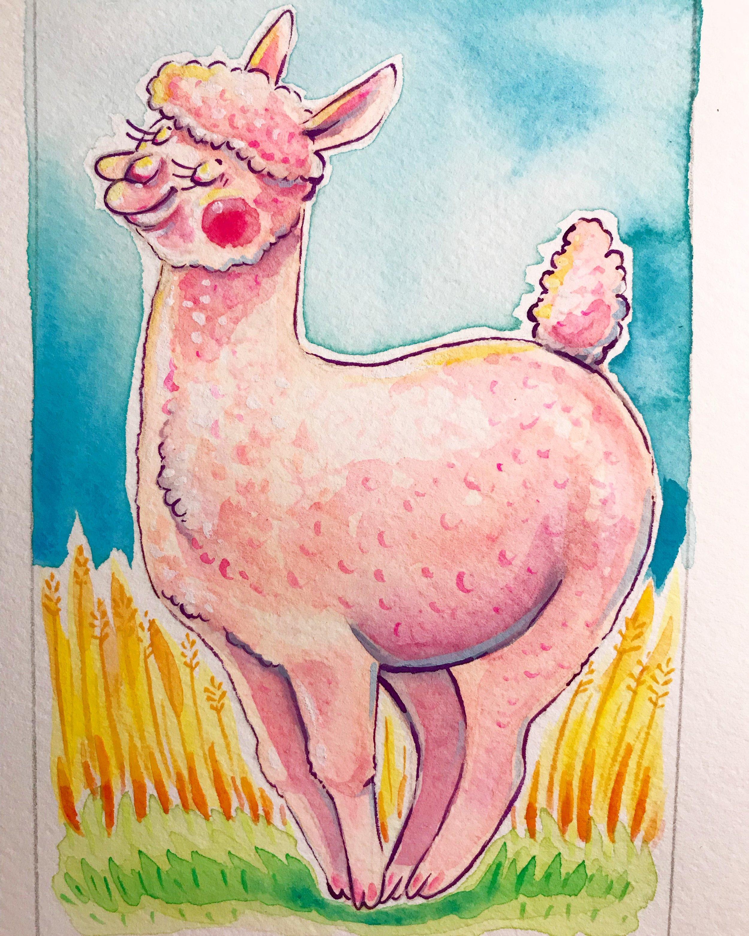 Pinky Alpaca