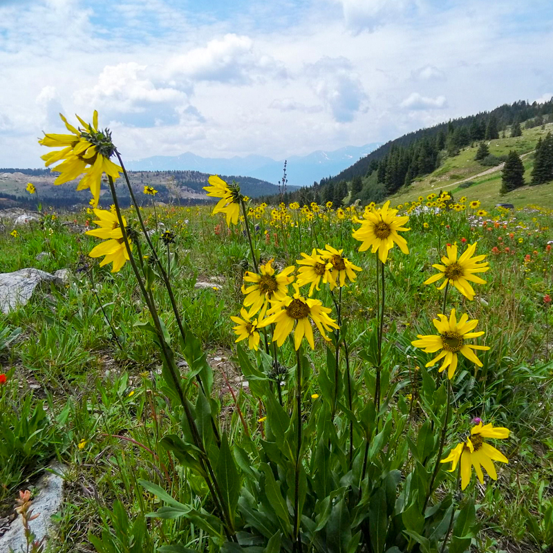 MOSQUITO PASS TRAIL - 12.5 mi | IntermediateAlmaTrail features beautiful wild flowers and is best visited between March and November. More Info >