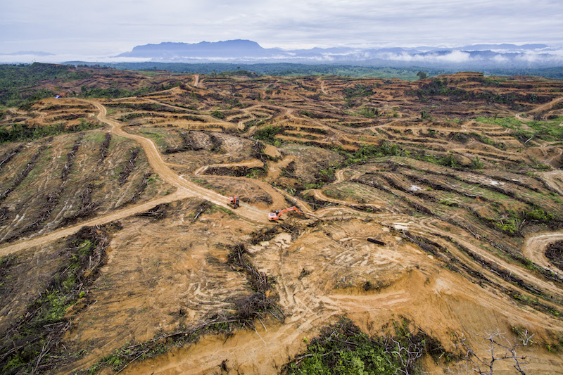 RAN-Indonesia-PT-BN-deforestation.jpg