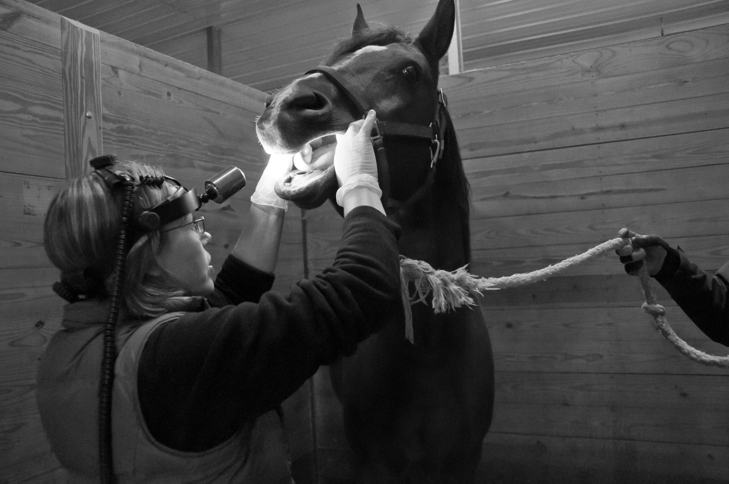 Dr. Nesson inspecting the oral cavity.