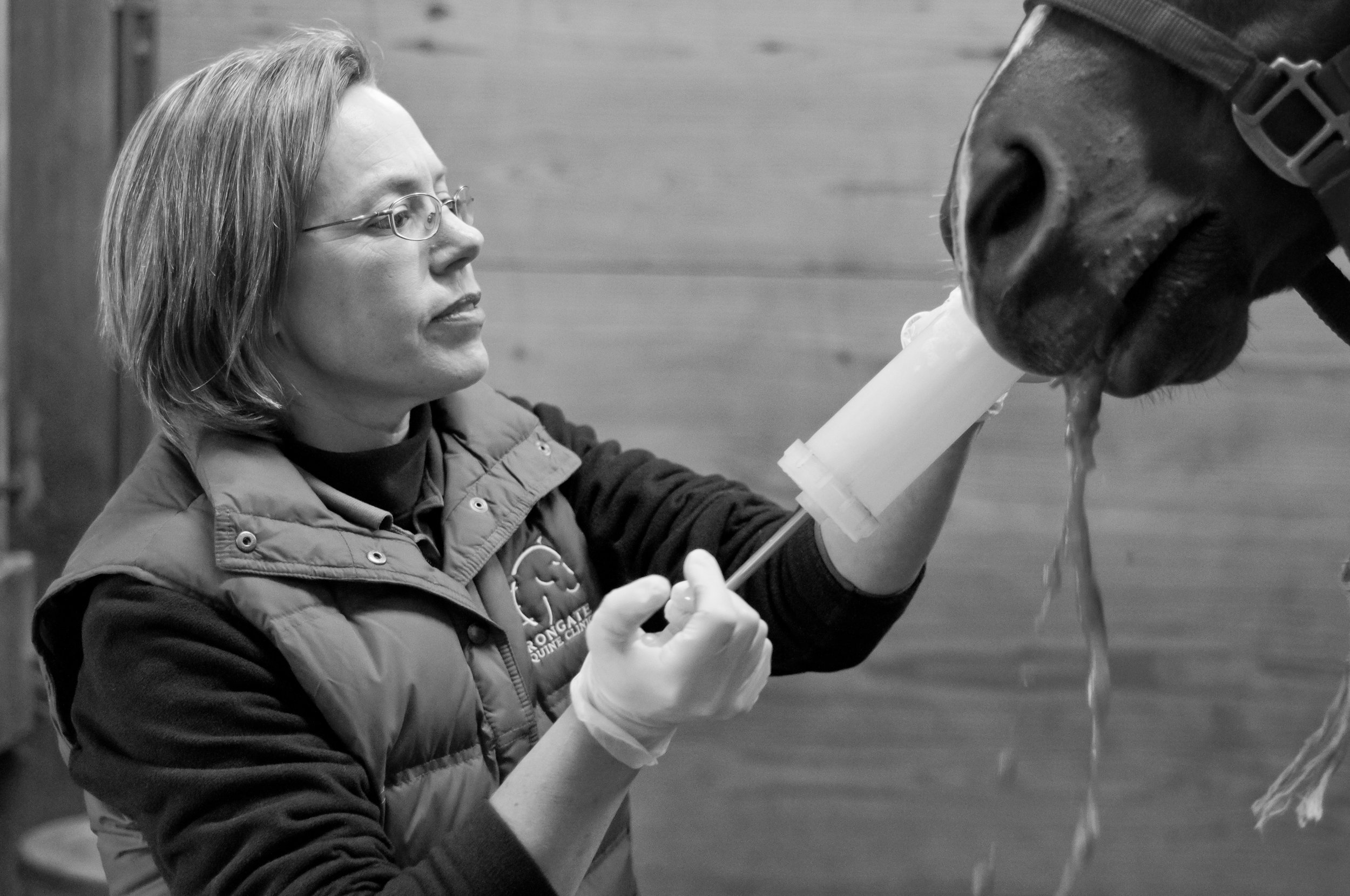 Dr. Nesson flushing debris from the horse's mouth to allow for a full examination.