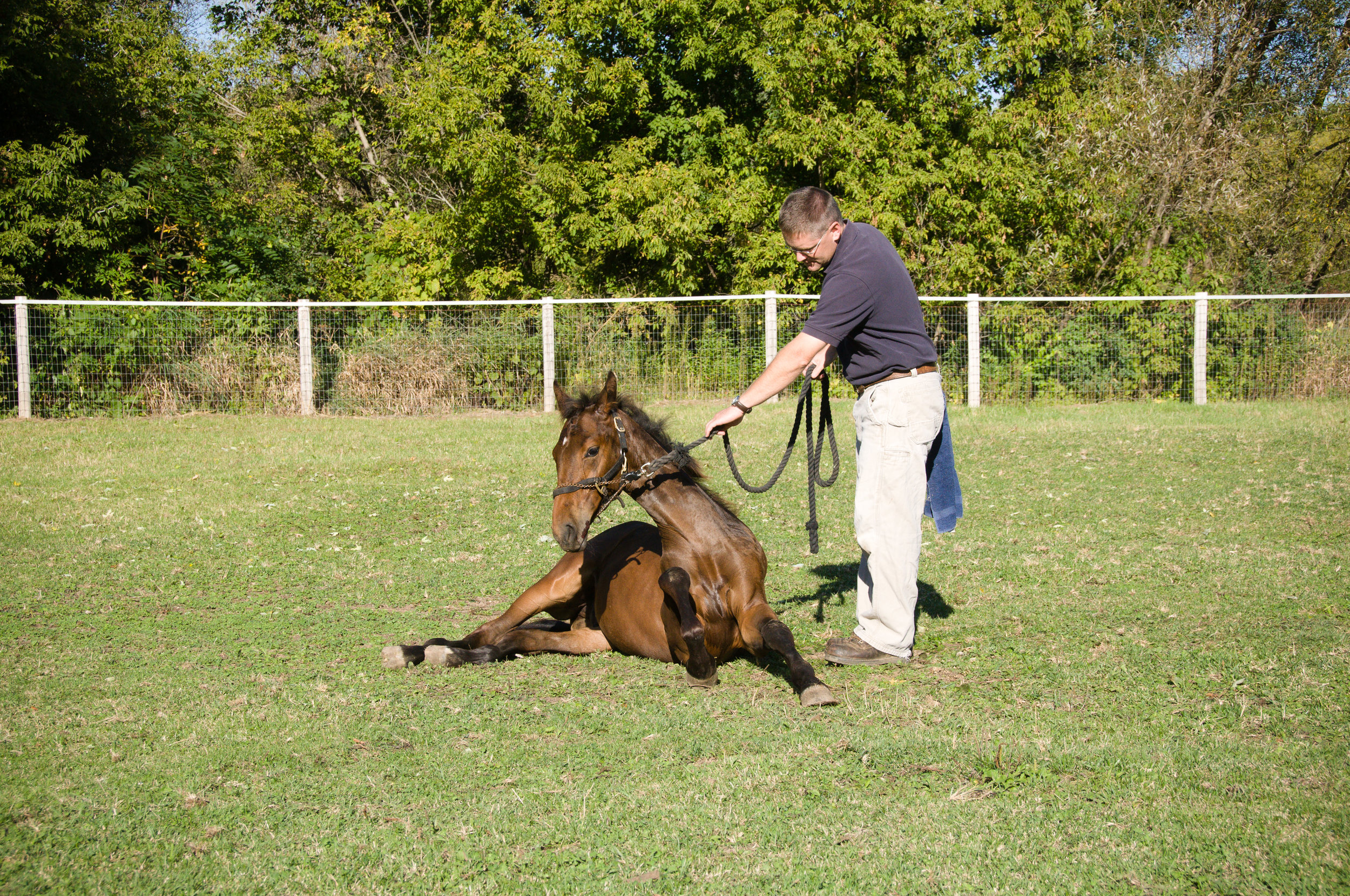 Dr. Howard Ketover is helping a new gelding recover from general anesthesia.