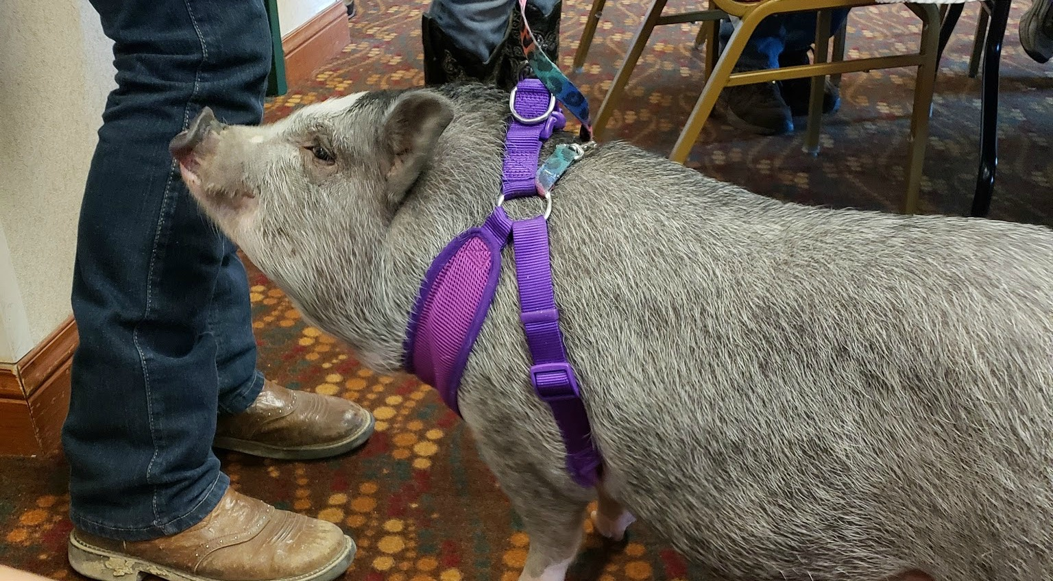 Even Bo the Pig stopped by for a visit