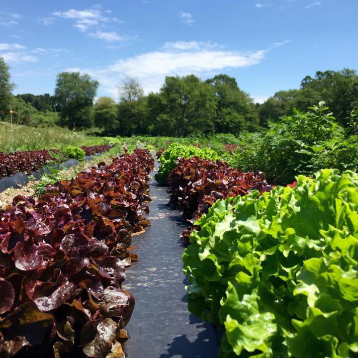 lettuce-small.jpg