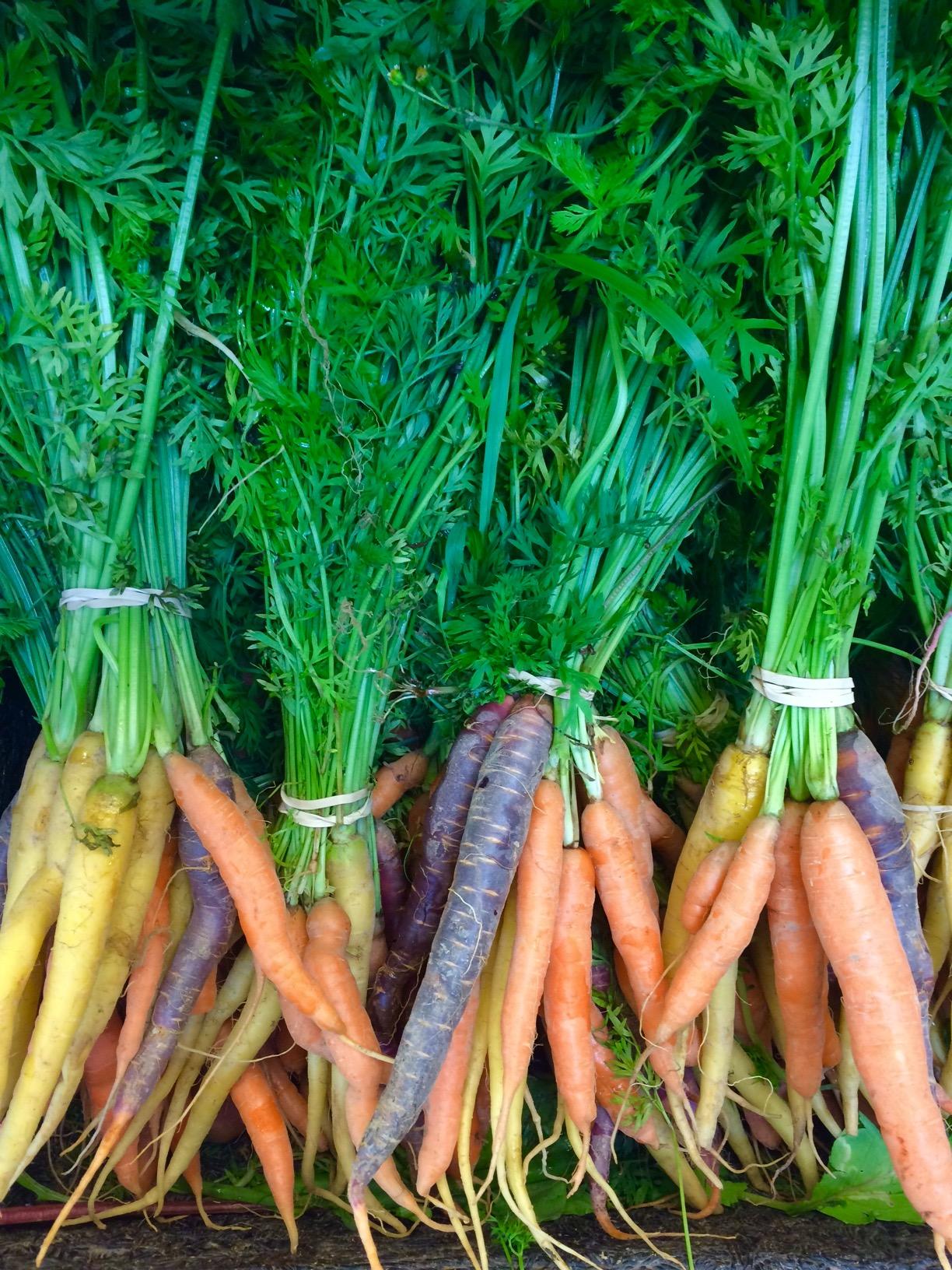 Carrots in a row.jpg