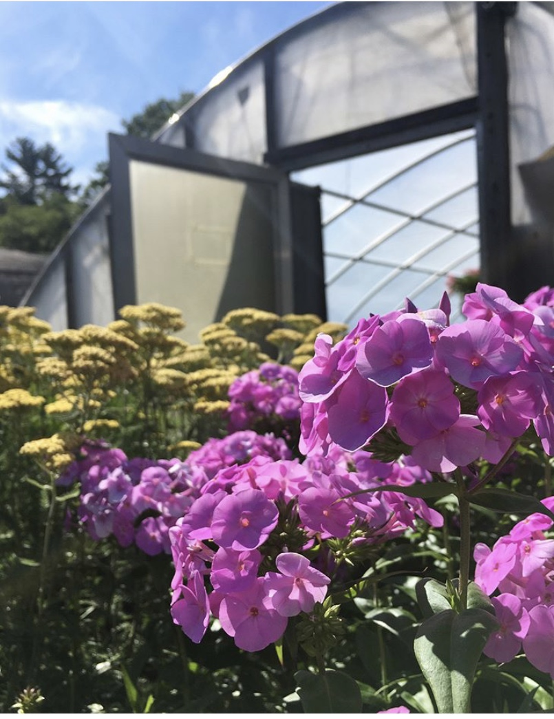 flowers in front of greenhouse.jpg